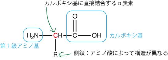 α-アミノ酸