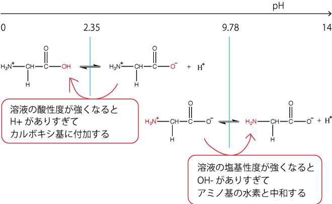 グリシン解離型