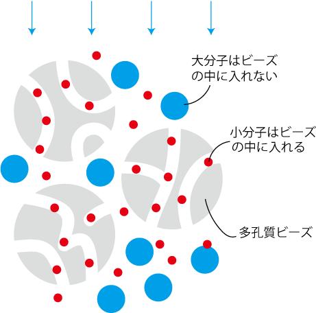ゲル濾過の原理