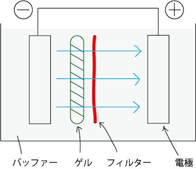エレクトロブロッティング法