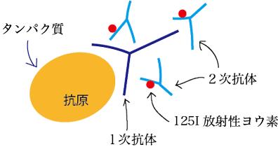 抗原-抗体反応