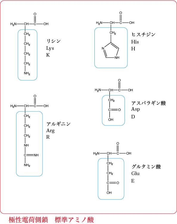 極性電荷標準アミノ酸
