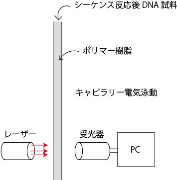 発光式DNAシーケンサー