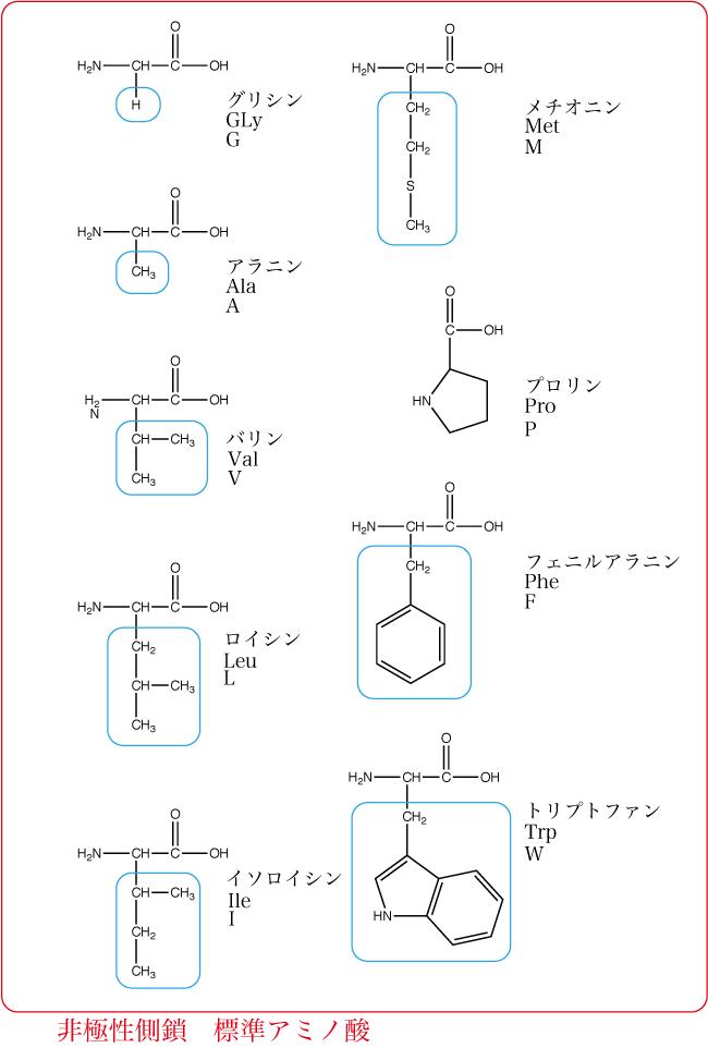 非極性側鎖標準アミノ酸